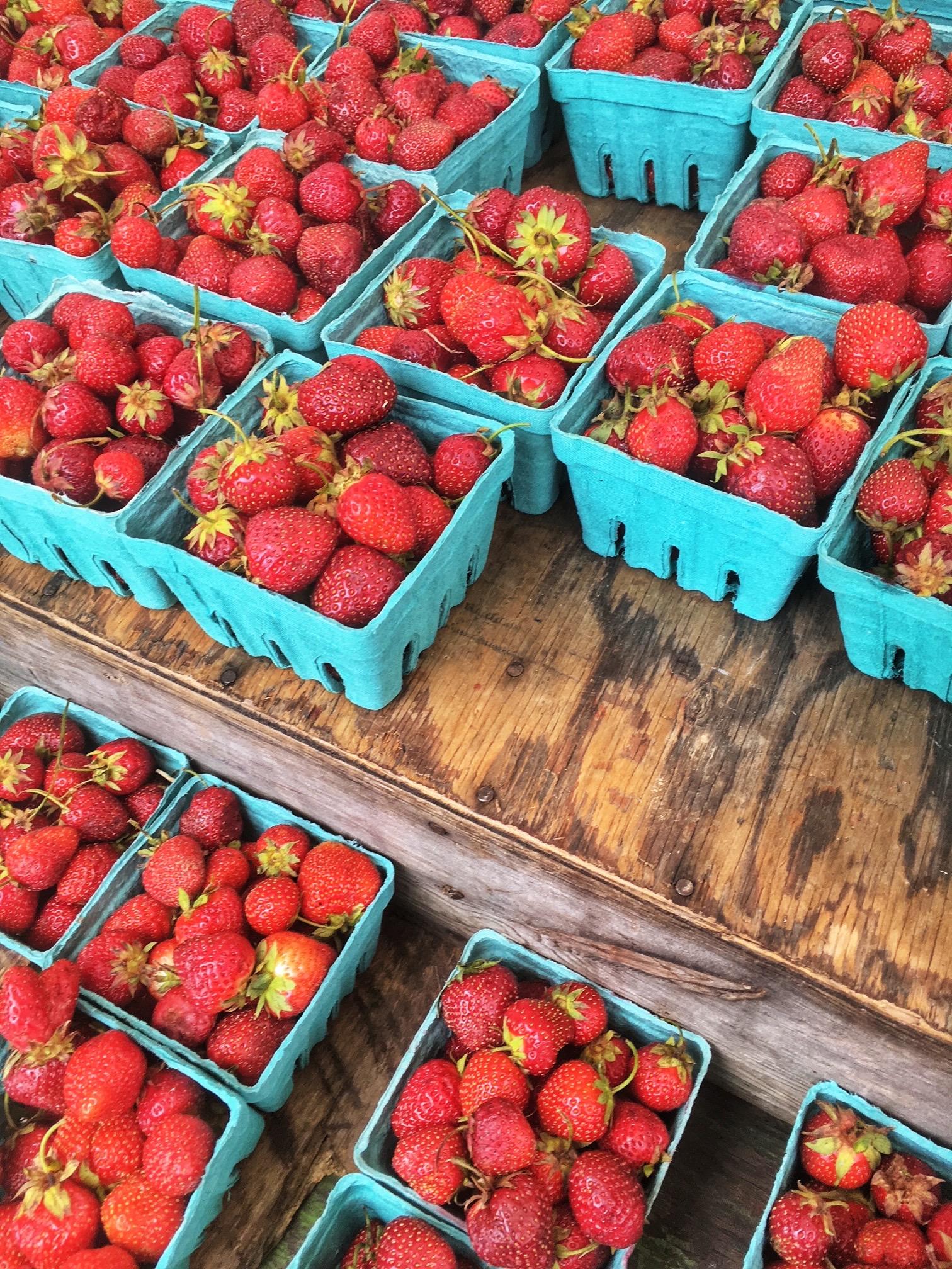 Berries at u-pick farm