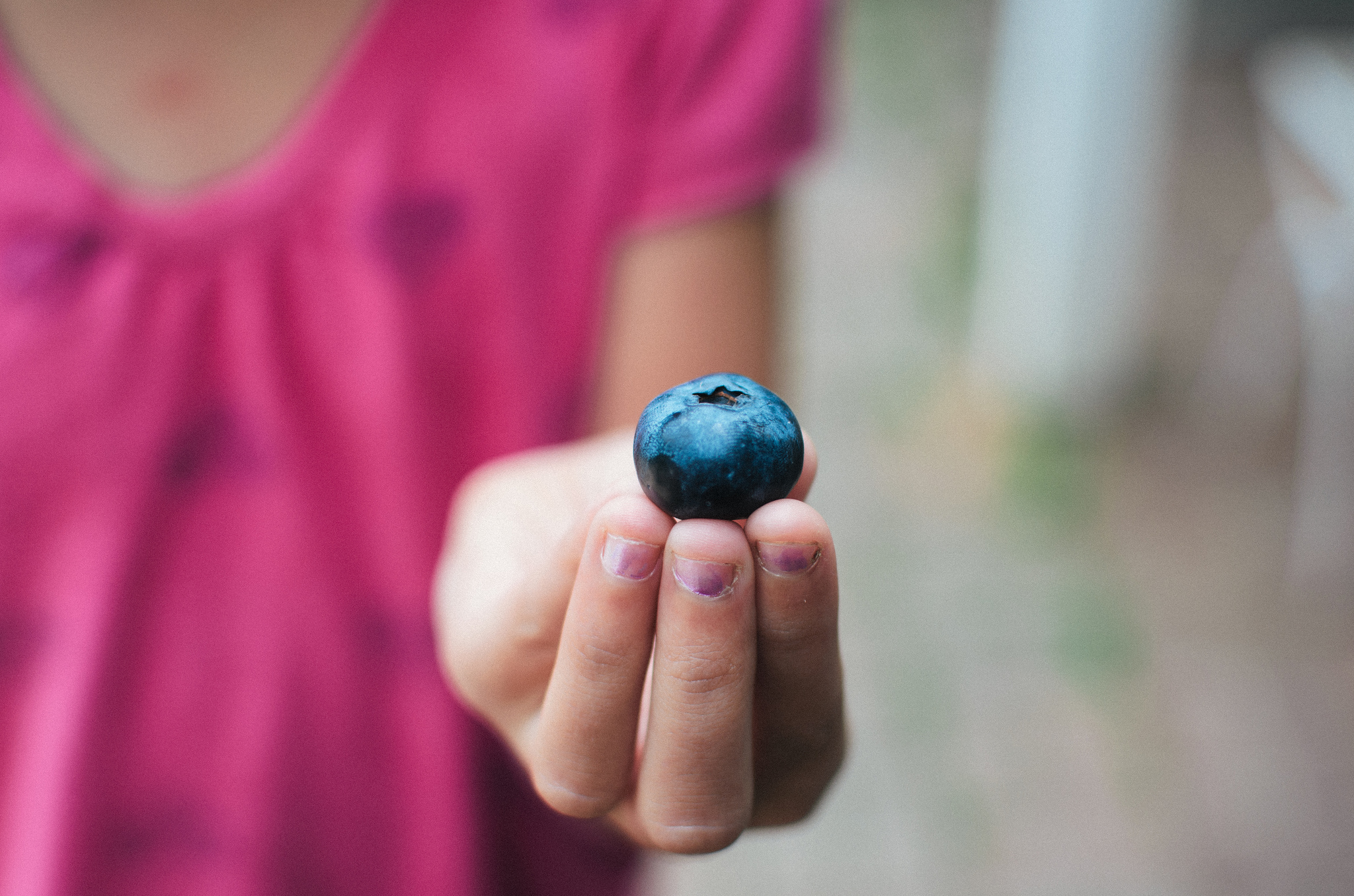blueberry U-picks: a fun activity available from July into September