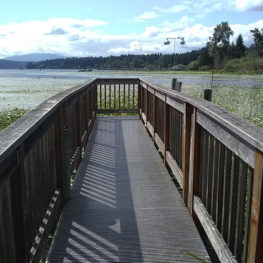 Wetland boardwalks: The boardwalk in Marymoor Park ends in Lake Sammamish.