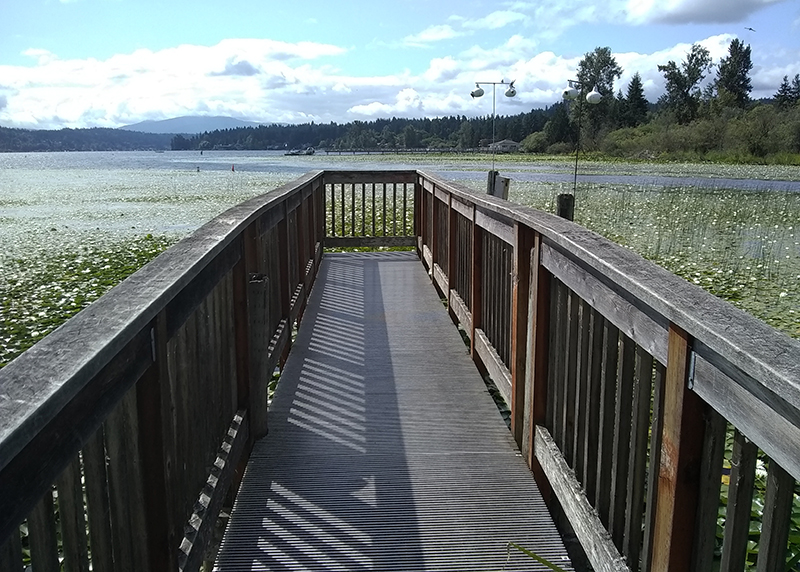 Wetland boardwalks: The boardwalk in Marymoor Park ends in Lake Sammamish.