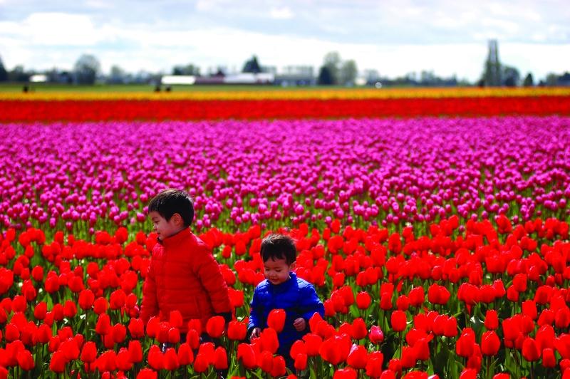 tulip festival photo tips