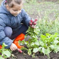 kid-friendly garden crops