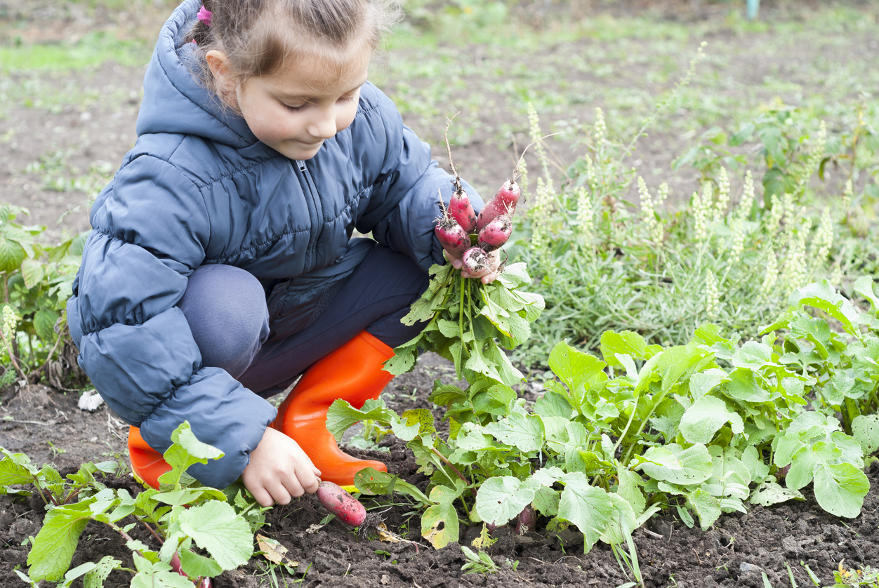 kid-friendly garden crops
