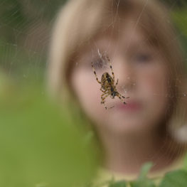 Spiders: Spider and child.