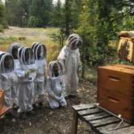 kids watching beekeeper