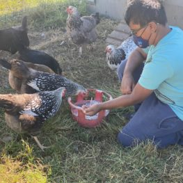Carnation Farms: Our reviewers older son, Nikhil, feeds chickens