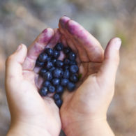 weekend picks: child's hands holding blueberries
