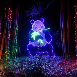 holiday lights zoolights