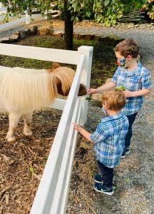 Pony and two boys at Fox Hollow Family Farm