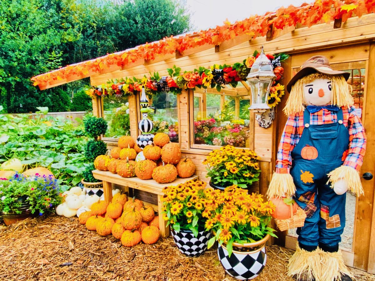 Pumpkin Patches: Display at Fox Hollow Family Farm