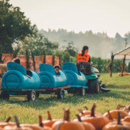 pumpkin patches: tractor train at Picha Farms