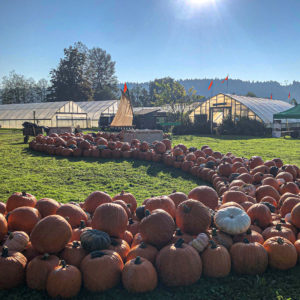 River of pumpkins display at Oxbow Farm