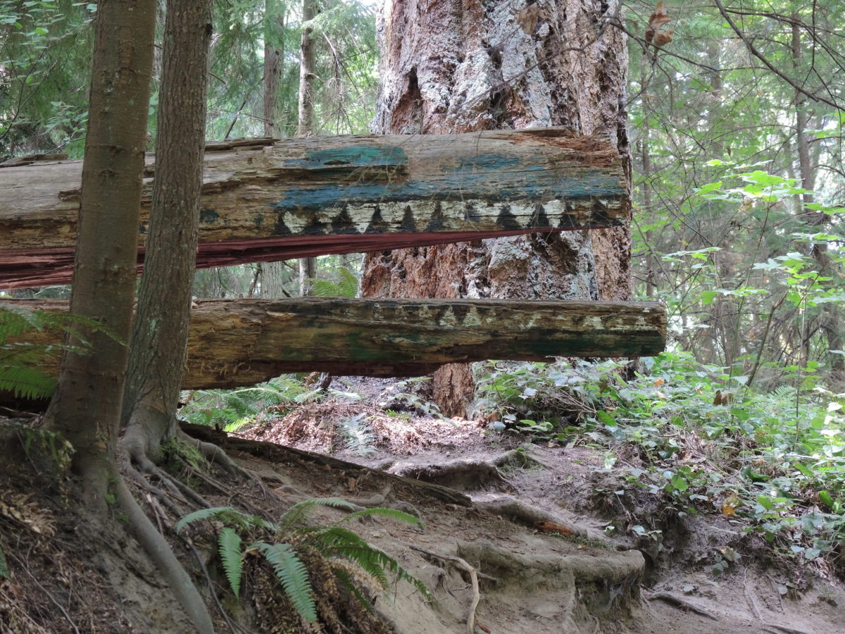 books: a sculpture of a crocodile by the trail in Schmitz Preserve Park