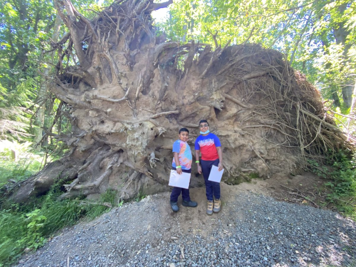 Children standing at the root of a fallen tree.