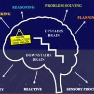 downstairs brain